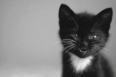 #cat #kitten #pussy #smile #cute