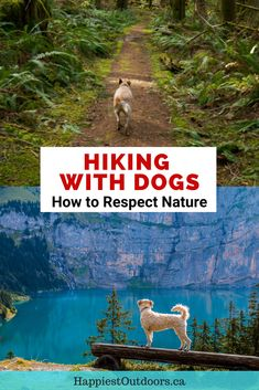 Do your part to keep the wilderness wild by learning how to Leave No Trace with dogs. Written by a PCT thru-hiker who advises you to hike your dog's hike. Thru Hiking, Hiking Trails, Go Outdoors, The Great Outdoors, Hiking Training, Hiking Places, Hiking Essentials, Hiking Dogs, Pacific Crest Trail
