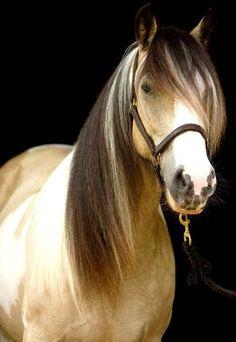 Pretty pretty pony