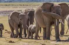 This article talks about the intelligence of elephants and the way they use their trunks to interact with the world around them, especially to solve problems.