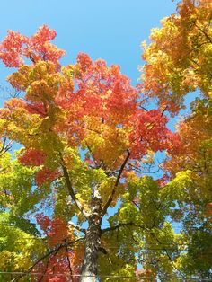 Wisconsin colors