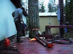 Tree felling in close quarters. - YouTube. This is just phenomenal! This is a man with mad skills. He cuts down the tree in a space with only inches to spare...house on one side, shed on another, and power pole on the 3rd side...this is really worth watching!!!!! His companion is calm and trusting and never, ever even gets nervous.