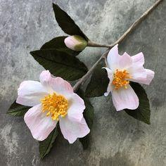 Apple Blossom camellia. #paperflowers