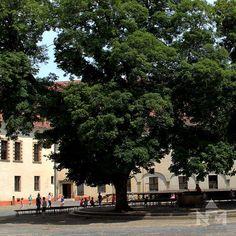 Félhold a fák ágai között a várudvaron.  #tree #moon #castle #court #daytime #sarvar #hungary