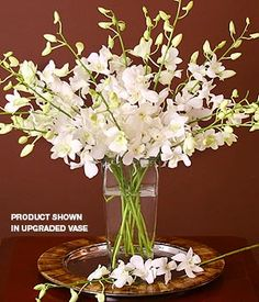 White cut Orchids Sp