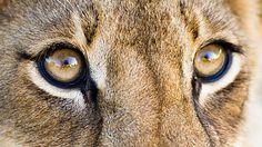 oči zvířat - Hledat Googlem