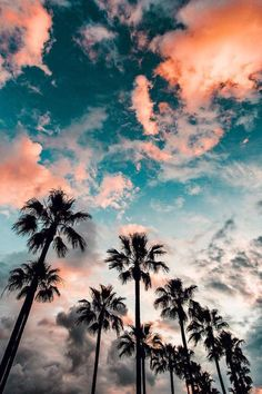 blue sky with clouds, tall palm trees, aesthetic iphone wallpaper Aesthetic Iphone Wallpaper, Aesthetic Wallpapers, Tumblr Wallpaper, Tree Wallpaper, Drawing Wallpaper, Cartoon Wallpaper, Wallpaper Ideas, Nature Wallpaper, Wallpaper Ipad Mini