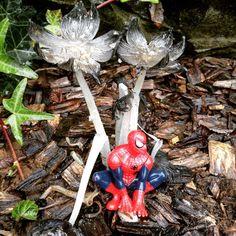 Spiderman à l'abri sous son parapluie ☔️#flowleaf2015
