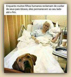 get Labrador stikers Labrador Mix, Labrador Retriever, Retriever Puppies, Memes Estúpidos, Funny Memes, Dressage, Mexican Hairless Dog, Animals And Pets, Cute Animals