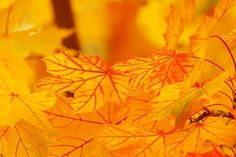 Abstract, Autumn, Background, Bright