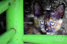 Un gatito vecino mio...