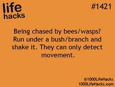 1000 Life Hacks life hack #lifehack #bees