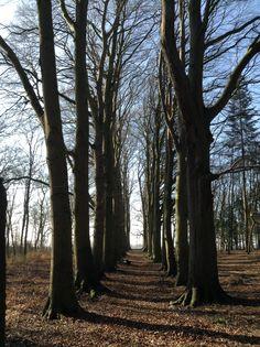 2014-03-09  Nabij Camping Het Haasje beland je ineens in een hooggelegen beukenbos tegen de IJssel