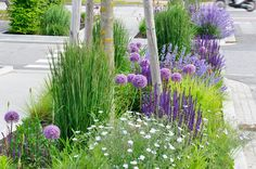 Great Hell Strip design - yeah, add in some allium bulbs for round balls of color.