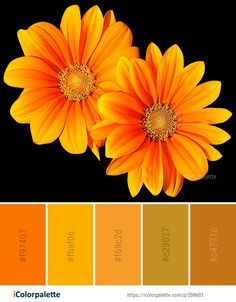 Color Palette Ideas from Flower Yellow Orange Image Color Combinations, Color Schemes, Orange Color Palettes, Gerbera, Color Pallets, Macro Photography, Happy Planner, Pantone, Color Inspiration
