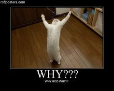 why God why? cat-s-are-cool