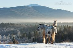 Winter morning in Bieszczady mountains and two beautiful models: Polańczyk and Polly