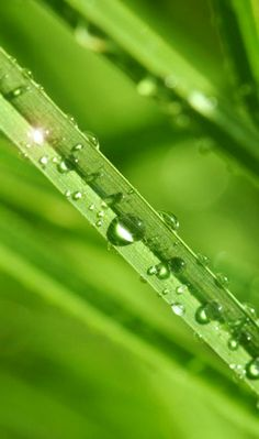 Droplets on the green grass