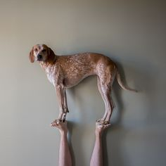 Maddie the Coonhound #photography #dog #balance