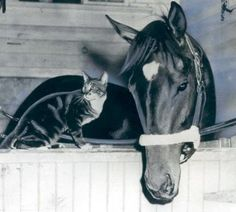 1956 Kentucky Derby winner, Needles, and his pet cat, Boots