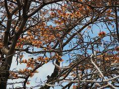 Mulungu  -  Parque Nacional Marinho de Fernando de Noronha