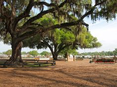 """Contrary to popular belief, #Ocala is more than just the """"Horse Capital of the World."""" If you love adventure and enjoy lush scenery, this is definitely a trip worth taking! #MarionCounty"""