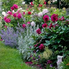 Cut down large bushes, replant perennials and small bushes. Dark green and blue-green foliage