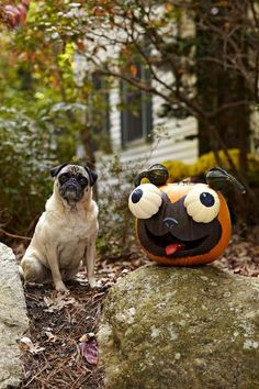 One of my family's favorite creations was this pug pumpkin, or pugkin, a Halloween version of our dog, Ralph. To attach the eyes and ears, we made holes in each gourd with a hammer and nail and used pieces of wire coat hanger to join them (an adult's job). My daughter Zoe suggested we give it a tongue. We painted a leftover piece of pumpkin red and placed it in the mouth. The perfect finishing touch!