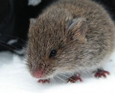winter-signs-mouse-in-house It's no old wives tale that rodent activity decreases during unseasonably warm weather, but some people believe they can sense minute changes in weather and prepare for it, too. If your home is prone to mice infestations and you start hearing activity in your walls earlier than normal, winter may come earlier than you expect.