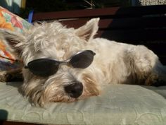 Angus. Owner: Louise Pyper (Facebook) June, Facebook, Pets, Animals, Animales, Animaux, Animal, Animais, Animals And Pets