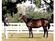 Forego(1970)Forli- Golconda By Hasty Road 5x5  To Teddy And Plucky Liege, 5x5 To Lady Juror Through Full Siblings Fair Trial(C) And Riot(F) On Sire Side. Family Of Phalaris and St. Simon's Son Chaucer, Who Is Broodmare Sire Of Both Fairway And Colorado.