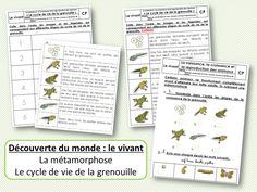 Les activités proposées pour le cahier de découverte du monde : Retrouvez la roue du cycle de vie de la grenouille ou le mini-livre sur le cycle de vie de la grenouille à décorer et à... Cycle, Bullet Journal, Science, Explorer, Ms Gs, School Stuff, Images, Mini Books, School Supplies