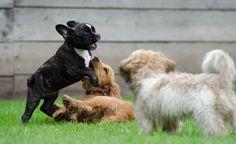 El país con más cara de perro | Noticias Uruguay y el Mundo actualizadas - Diario EL PAIS Uruguay