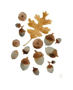 Leave and acorn painting