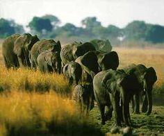 Elephants in Chobe National Park, Botswana