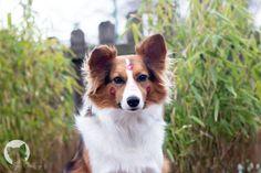 Hundeblog - Alltag mit Hund, DIY, Rezepte, Erziehung, Tricks und vieles mehr.