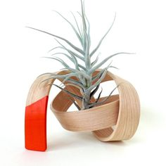 Solid handmade bent wood sculpture accompanied by an air plant. Many amazing shapes and forms are available. Made in Brooklyn, NY.