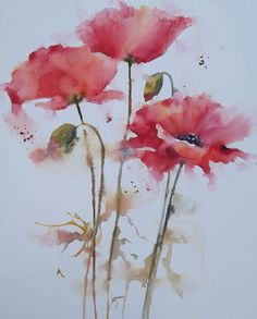 Watercolours by Heather Withers Watercolor Poppies, Watercolor Artwork, Watercolor Cards, Watercolor Illustration, Pink Poppies, Easy Flower Painting, Flower Art, Remembrance Day Art, Abstract Art Images