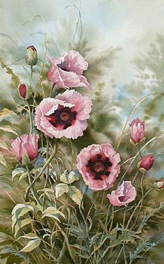 Pink Poppies - Taylor Stonington