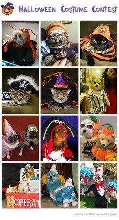 Homemade Costumes for Pets - this website has tons of DIY costume ideas! Cute Dog Costumes, Animal Costumes, Halloween Costumes For Kids, Costume Ideas, Halloween Costume Accessories, Homemade Costumes, Cute Cats And Dogs, Diy Stuffed Animals, Pet Clothes