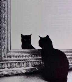 These cats, however, not only notice mirrors, they have a myriad of reactions from fear to anger to curiosity and everything in between. A definite must watch for cat lovers and funny cat video lovers! Crazy Cat Lady, Crazy Cats, Cute Cats, Funny Cats, Animals And Pets, Cute Animals, Arte Obscura, Photo Chat, Cat Aesthetic