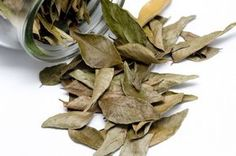 This Leaf Can Fight Joint Pains, Memory Loss, Headache and Varicose Veins – HealthTipsCentral Carne Asada, Burning Bay Leaves, Bay Laurel Tree, Combattre Le Stress, Spices And Herbs, Aromatic Herbs, Medicinal Plants, Healthy Tips, Health Tips