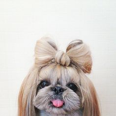 So cute  I  did that  with my dog and she looked  so cute