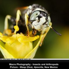 Another macro of a Bee at work !