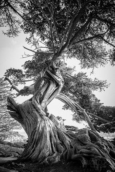 twisted tree by Spike at Buzz Click photography :)