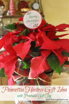 Poinsettia Care Tips PLUS a great Poinsettia Hostess Gift Idea with a FREE printable Gift Tag. Poinsettias make perfect gifts for the holiday and Christmas.