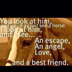 You look at him, and you may just see a horse. I look at him and I see....An escape, An angel, Love, and a best friend. Absolute truth!!!