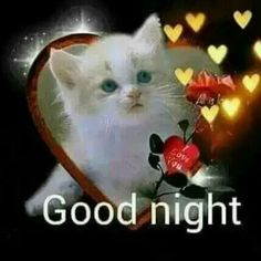 We send good night images to our friends before sleeping at night. If you are also searching for Good Night Images and Good Night Quotes. Good Night Cat, Good Night I Love You, Good Night Love Images, Good Night Prayer, Good Night Blessings, Cute Good Morning, Good Night Sweet Dreams, Good Night Image, Good Night Greetings