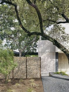 Architecture firm Alterstudio has raised the glazed living room of this house in Austin, Texas, to avoid the roots of an oak tree that grows close beside. Bungalows, Houses In Austin, Gabion Wall, Magazin Design, Boundary Walls, Architecture Images, Concrete Architecture, Residential Architecture, Architectural Section
