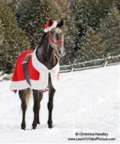 DIY Santa Horse Blanket - PetDIYs.com